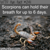 scorpions holding their breath
