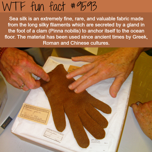 Sea Silk - WTF fun fact