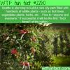 seattle fruit forest