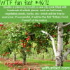 seattles food forest wtf fun facts