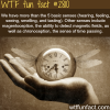 secret senses that humans have