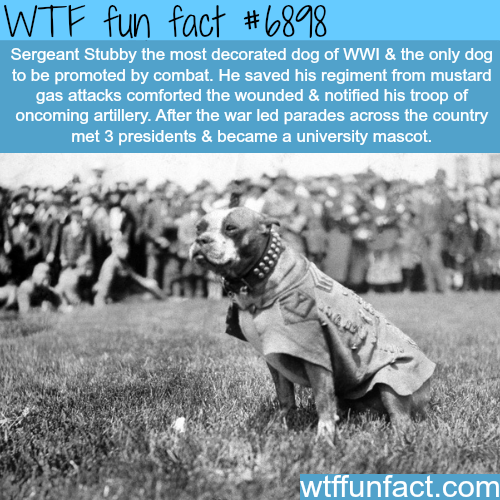 Sergeant Stubby - WTF fun fact