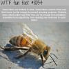 serial killers and bees wtf fun fact