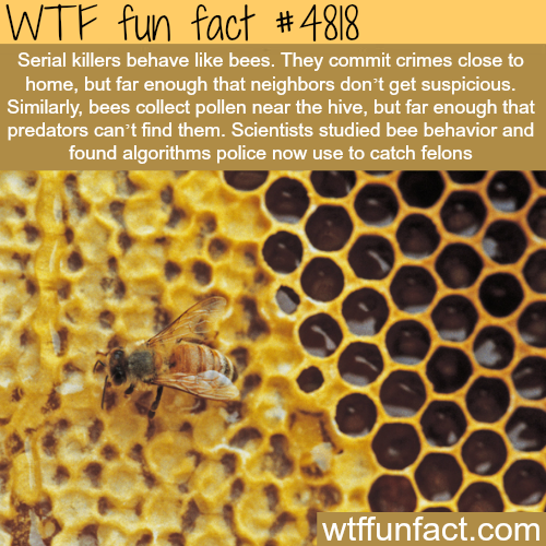 Serial killers behave like bees - WTF fun facts