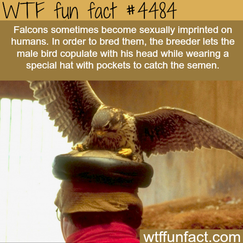 Sexual imprinting -   WTF fun facts
