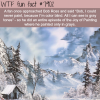 shades of grey by bob ross wtf fun facts