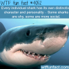 sharks facts wtf fun facts