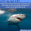 sharks have the best immunity wtf fun facts