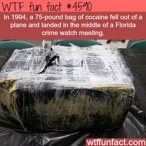 Shit that only happen in Florida -   WTF fun facts