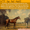 sir archy wtf fun facts
