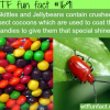 skittles contain crushed insect cocoons