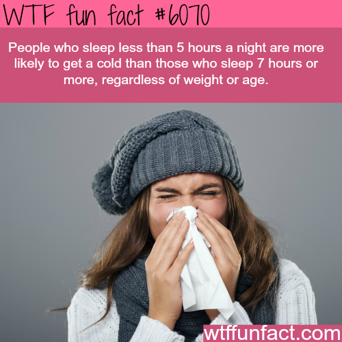 Sleep - WTF fun facts