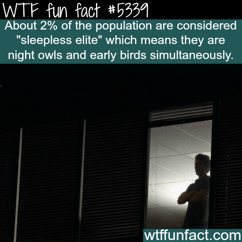Sleepless elite - WTF fun facts