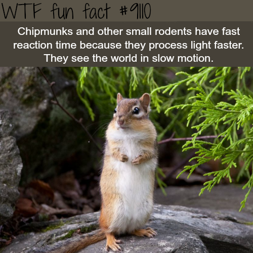 Small animals see the world in slow motion - WTF fun fact