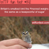 smallest bird in britain the firecrest