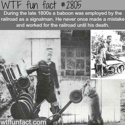 Smartest monkey in history -WTF fun facts