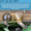 snail gets friend zoned wtf fun fact