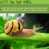 snails teeth wtf fun facts