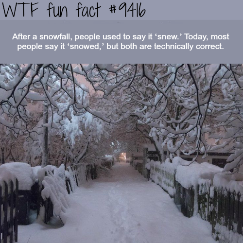 Snowed or Snew? - WTF fun facts