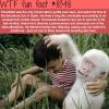 snowflake the albino gorilla wtf fun facts