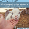 snuggle with baby goats wtf fun facts