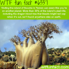 socotra island in yemen wtf fun facts