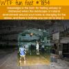 solastalgia wtf fun facts