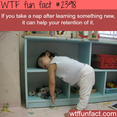 Some facts about Naps - WTF fun facts