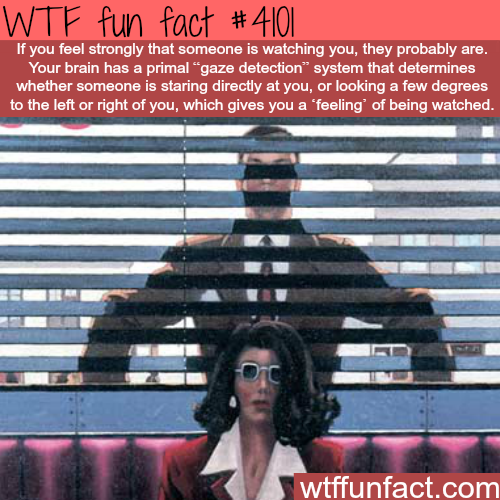 Someone is watching you - WTF fun facts