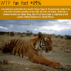 south china tiger wtf fun fact