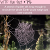spider web wtf fun fact
