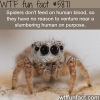 spiders dont want to bite you wtf fun facts