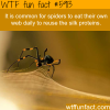 spiders eat their own web wtf fun facts
