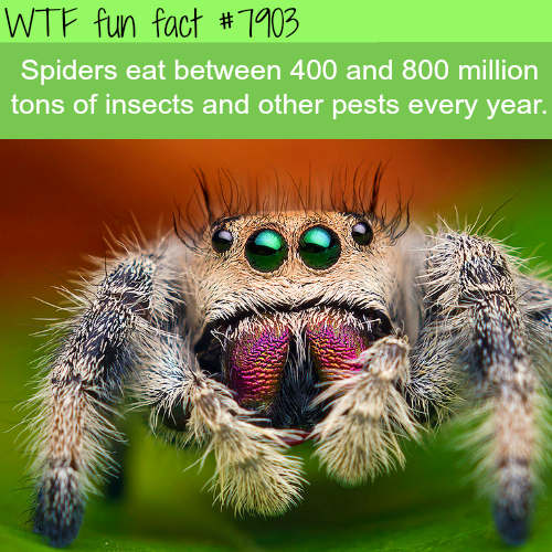 Spiders facts - WTF fun facts