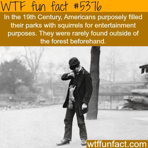 Squirrels - WTF fun facts