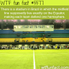 stadium in brazil is right on the equator wtf