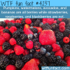strawberries and blackberries are not berries
