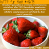 strawberry generation wtf fun facts