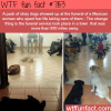 stray dogs show up to a funeral of a woman that