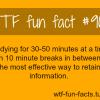 studding fact