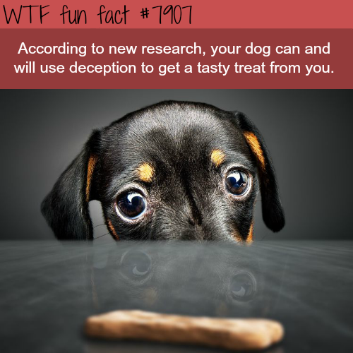 Study finds that dogs will use deception - WTF fun facts