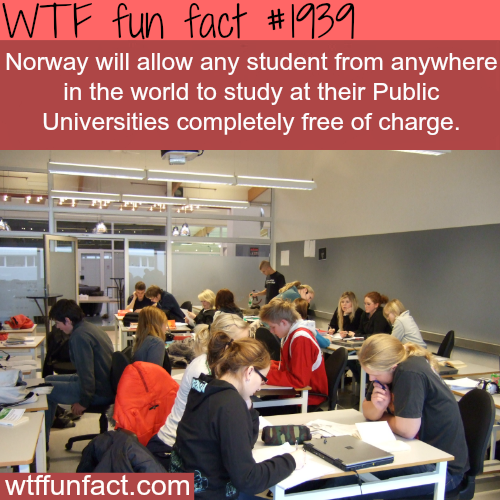 Study in Norway for FREE - WTF fun facts