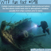 sunken ships wtf fun facts
