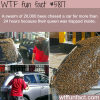 swarm of thousands of bees chased a car wtf fun