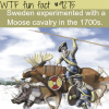 swedens moose cavalry wtf fun fact