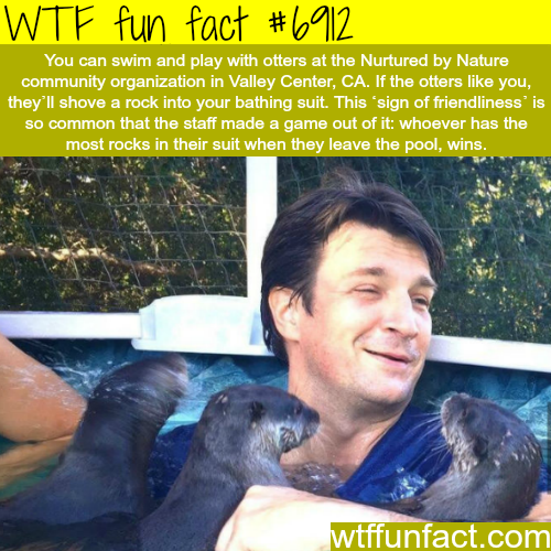 Swim and play with otters - WTF fun fact