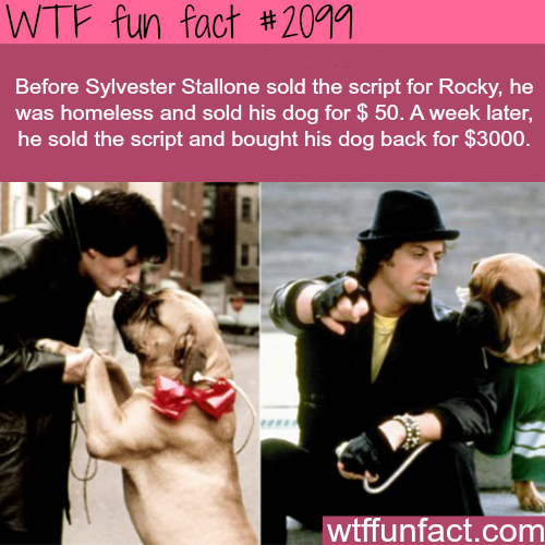 Sylvester Stallone and his dog -WTF fun facts