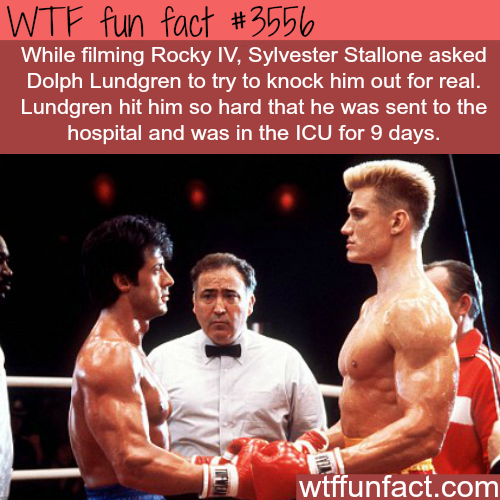 Sylvester Stallone got punched by Dolph Lundgren - WTF fun facts