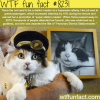 tama the cat wtf fun facts