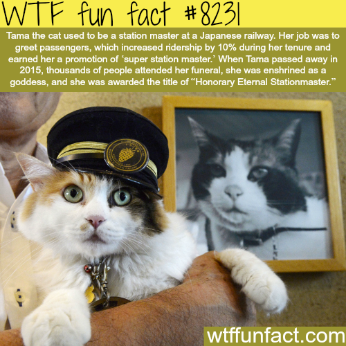 Tama the cat - WTF fun facts